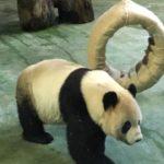 台北の動物園