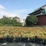 【台北 観光】小南門や古亭からも近い「台北植物園」はおすすめ