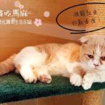 【台湾 猫カフェ】桃園にある猫森咖啡 nekomoricafe
