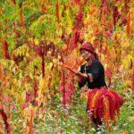【2020 台東 紅藜季】神秘的な排灣族の文化体験と櫻木花道など盛りだくさん!南迴線と台東市郊外の美しい景色