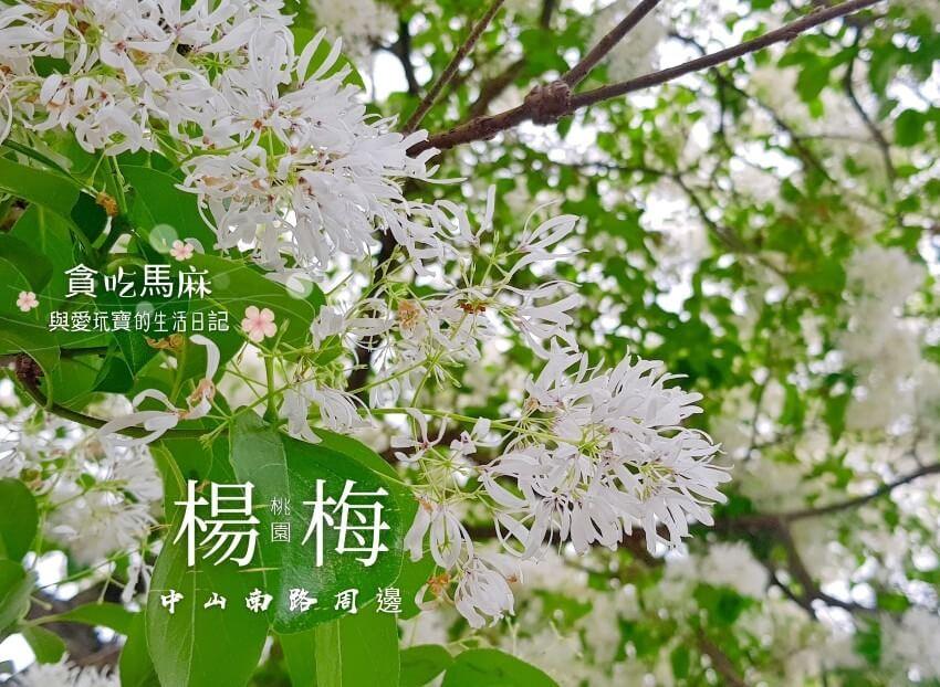 楊梅中山南路