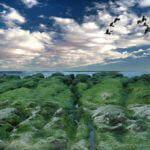 【 台北 ツアー 】淡水を宿泊拠点に 陽明山、石門 / 富基漁港、金山など北海岸を巡る